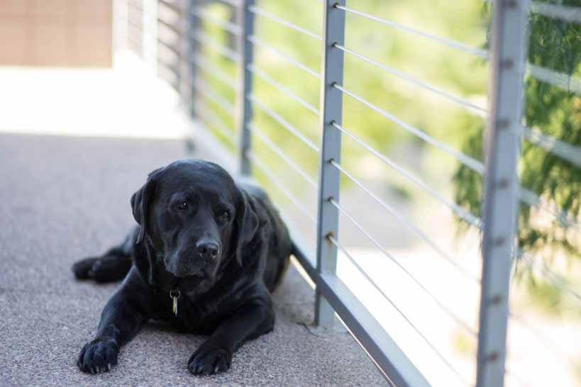 Avoir un chien de garde : bonne idée ?